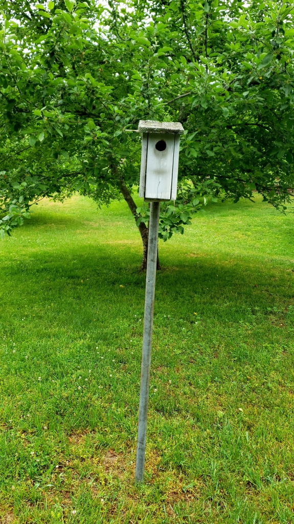 house wren house in an orchard