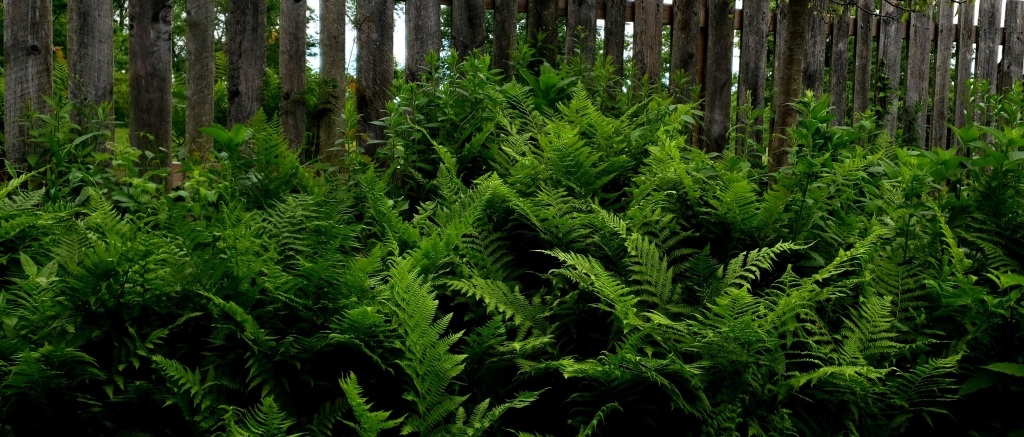 green ferns against a wooden fence