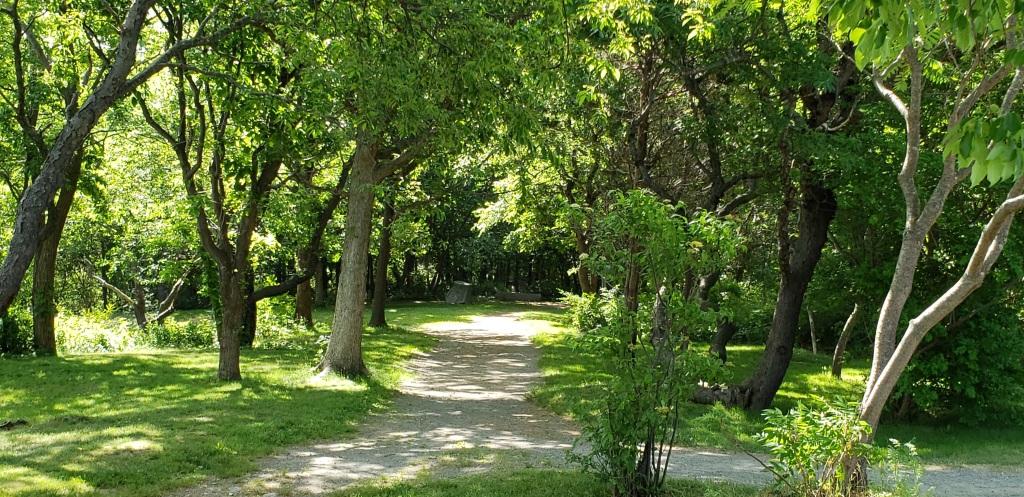 a sandy path through the woods