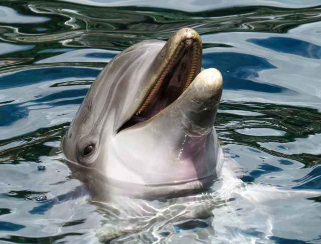 dolphin peeking out of the ocean