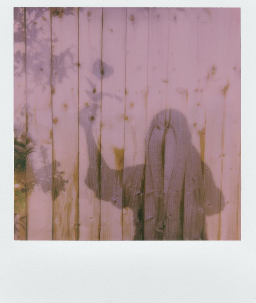 an old polaroid photo