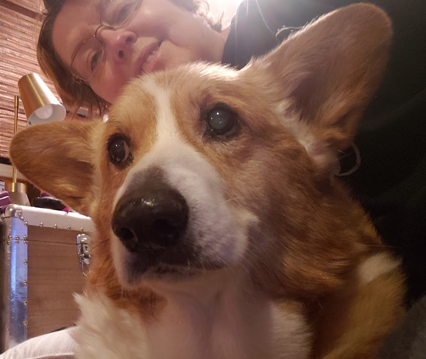 corgi with sweet face