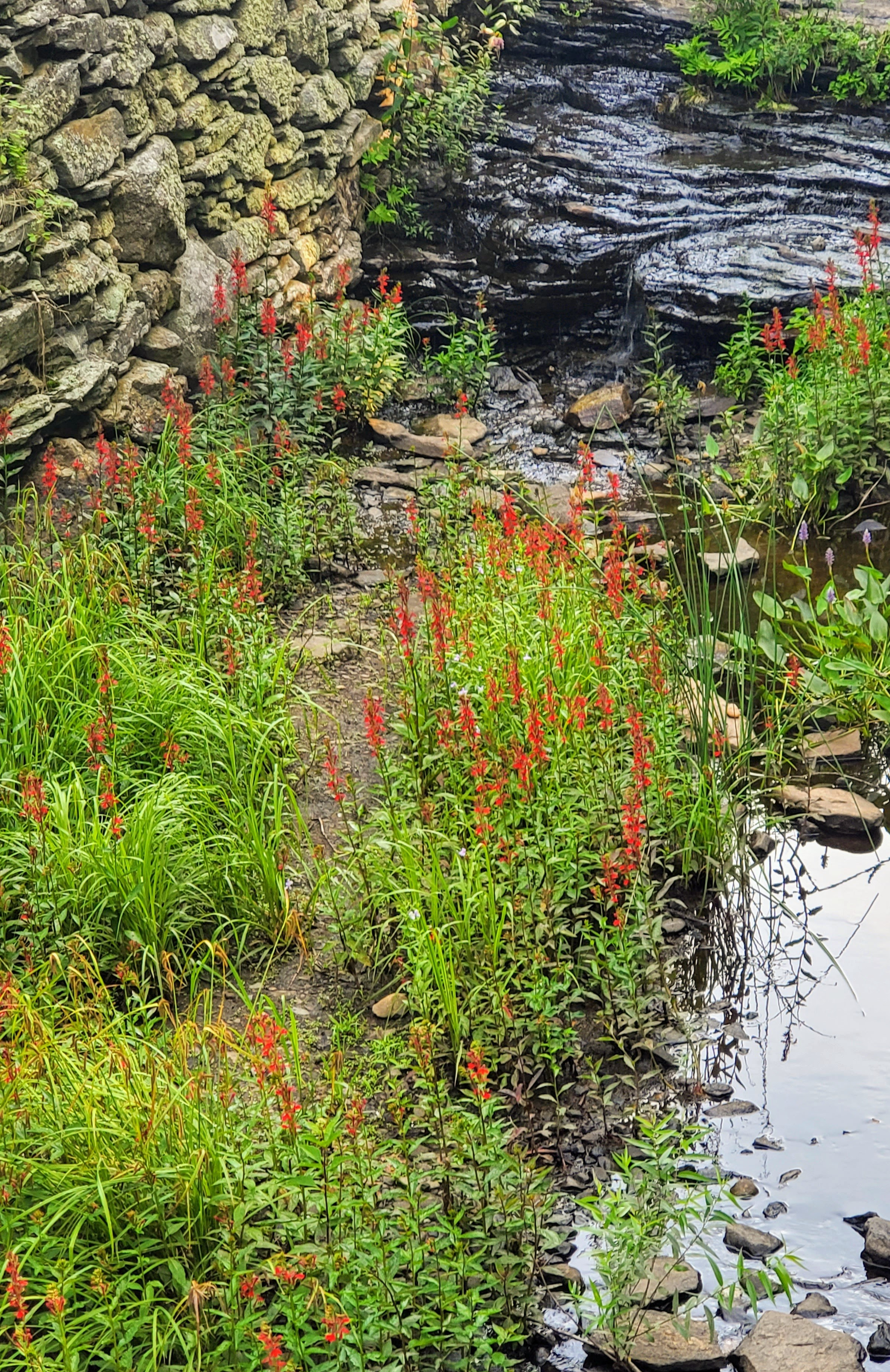 red flowers growing along the streambed