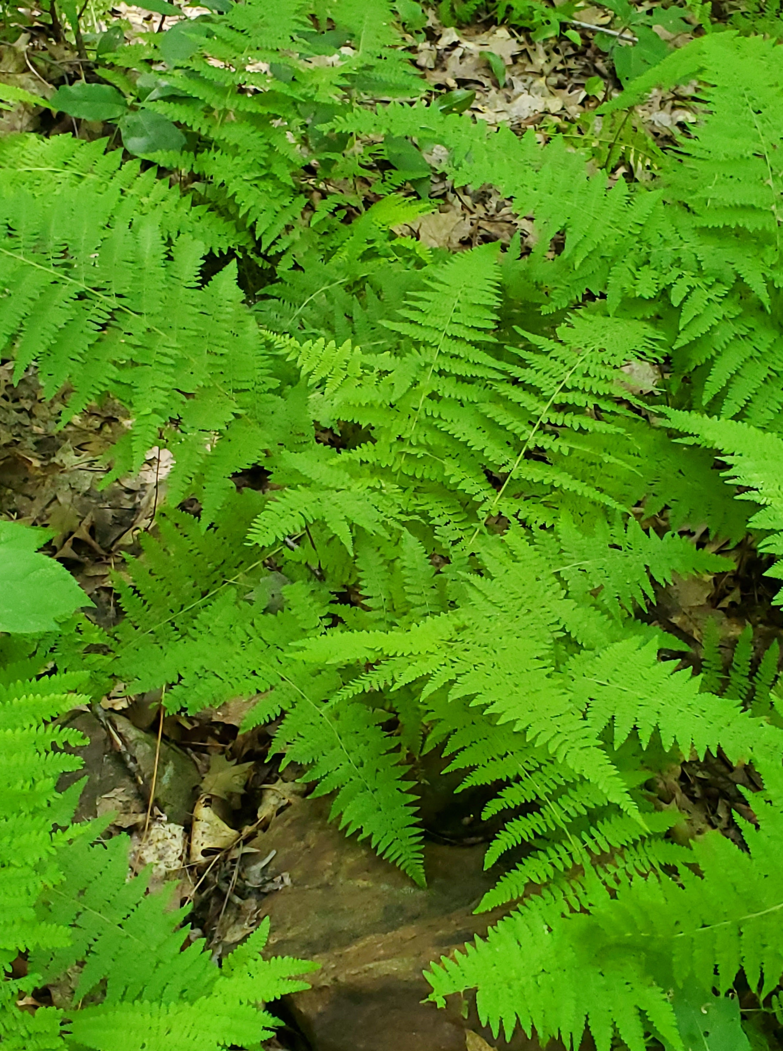 brilliant green fern