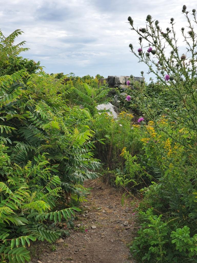 An overgrown path to the beach