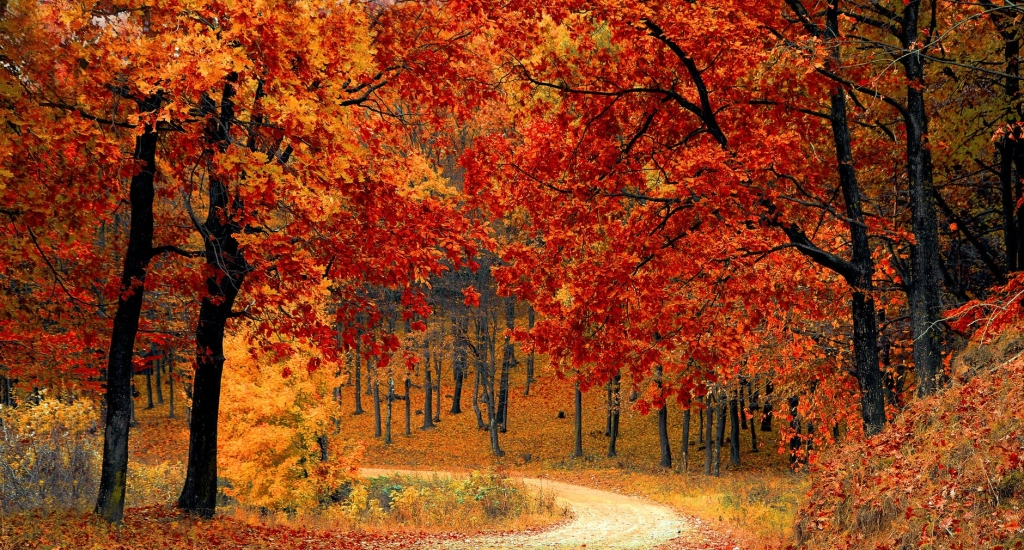 Beautiful orange leaves in the forest