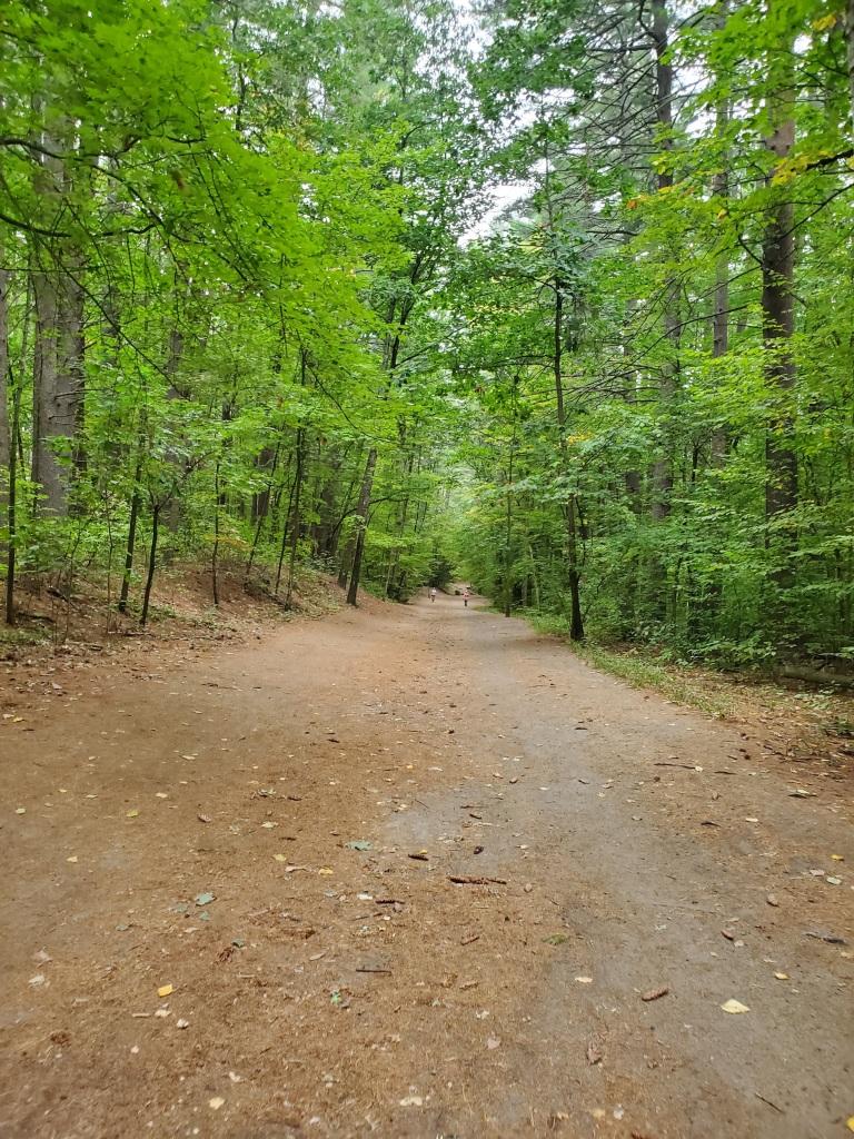 long flat trail through the forest
