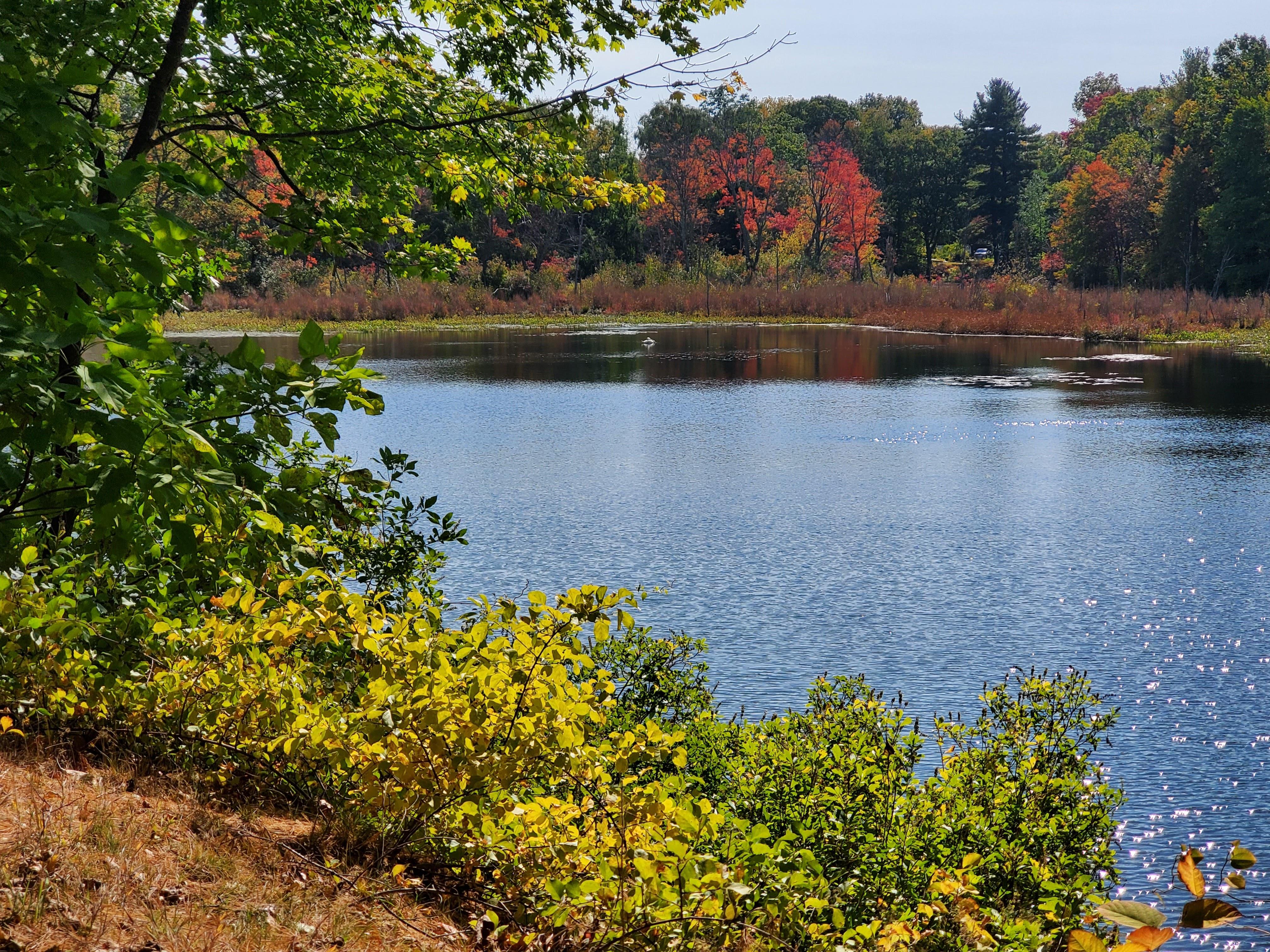 pond/creek surrounding the cemetery