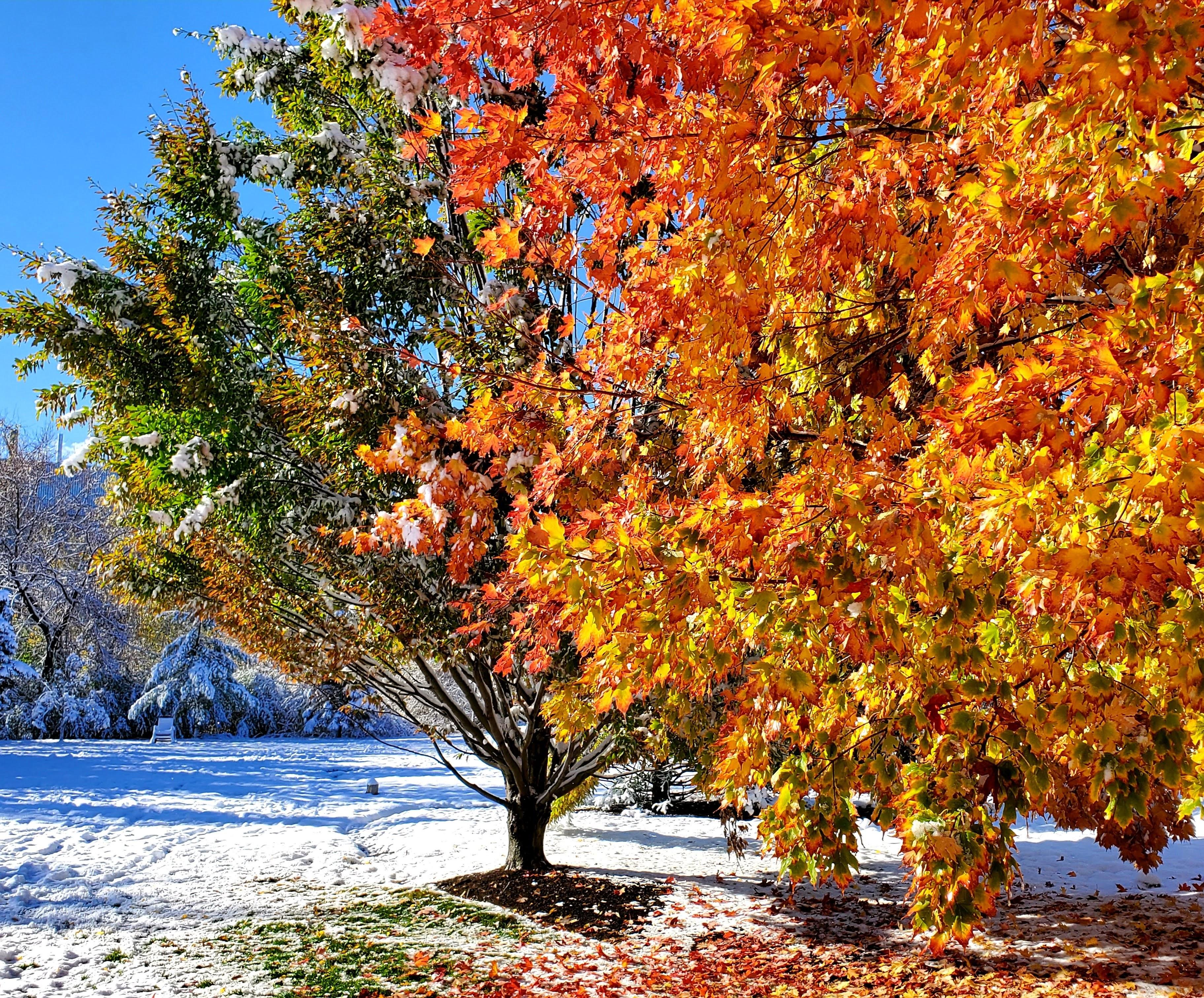 bright orange leaves against the snow