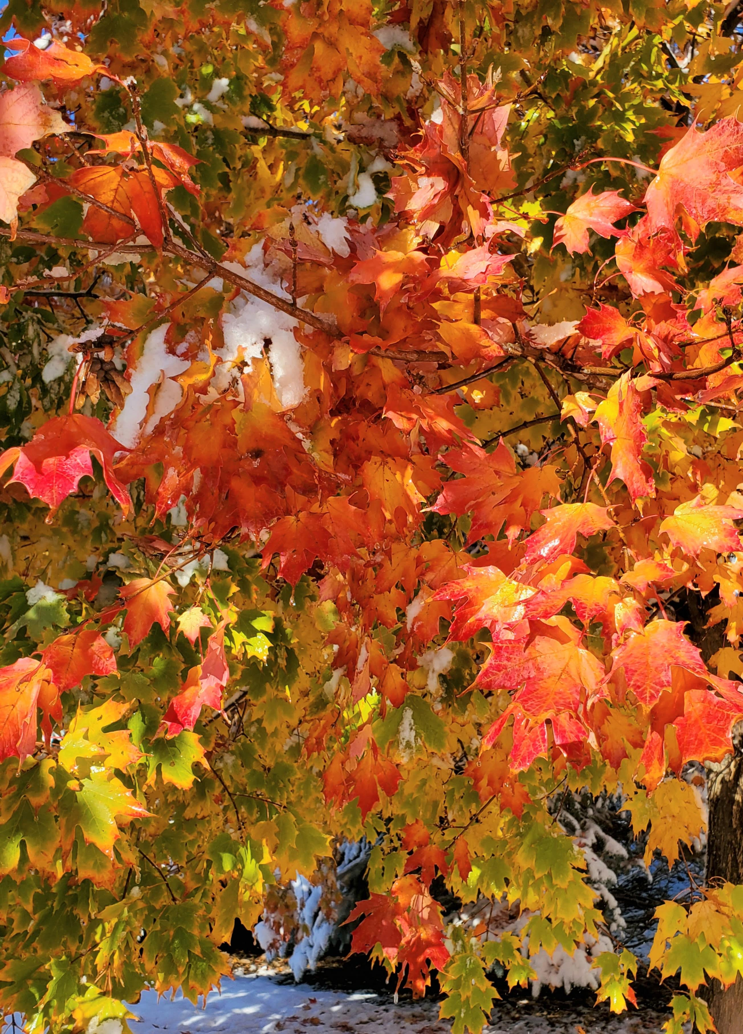 orange and yellowish green leaves hanging from a tree