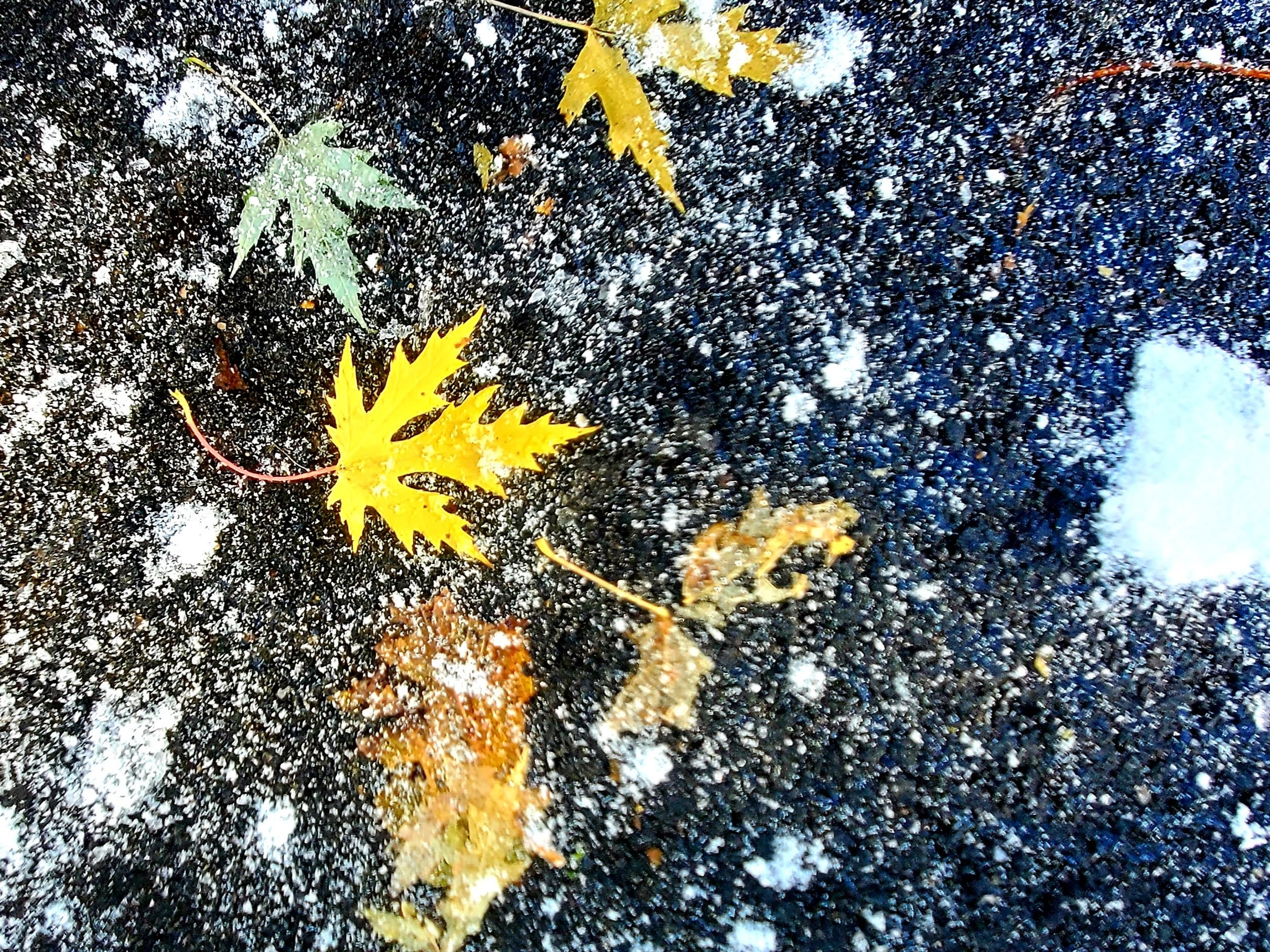 One brilliant yellow leave against snow splattered pavement