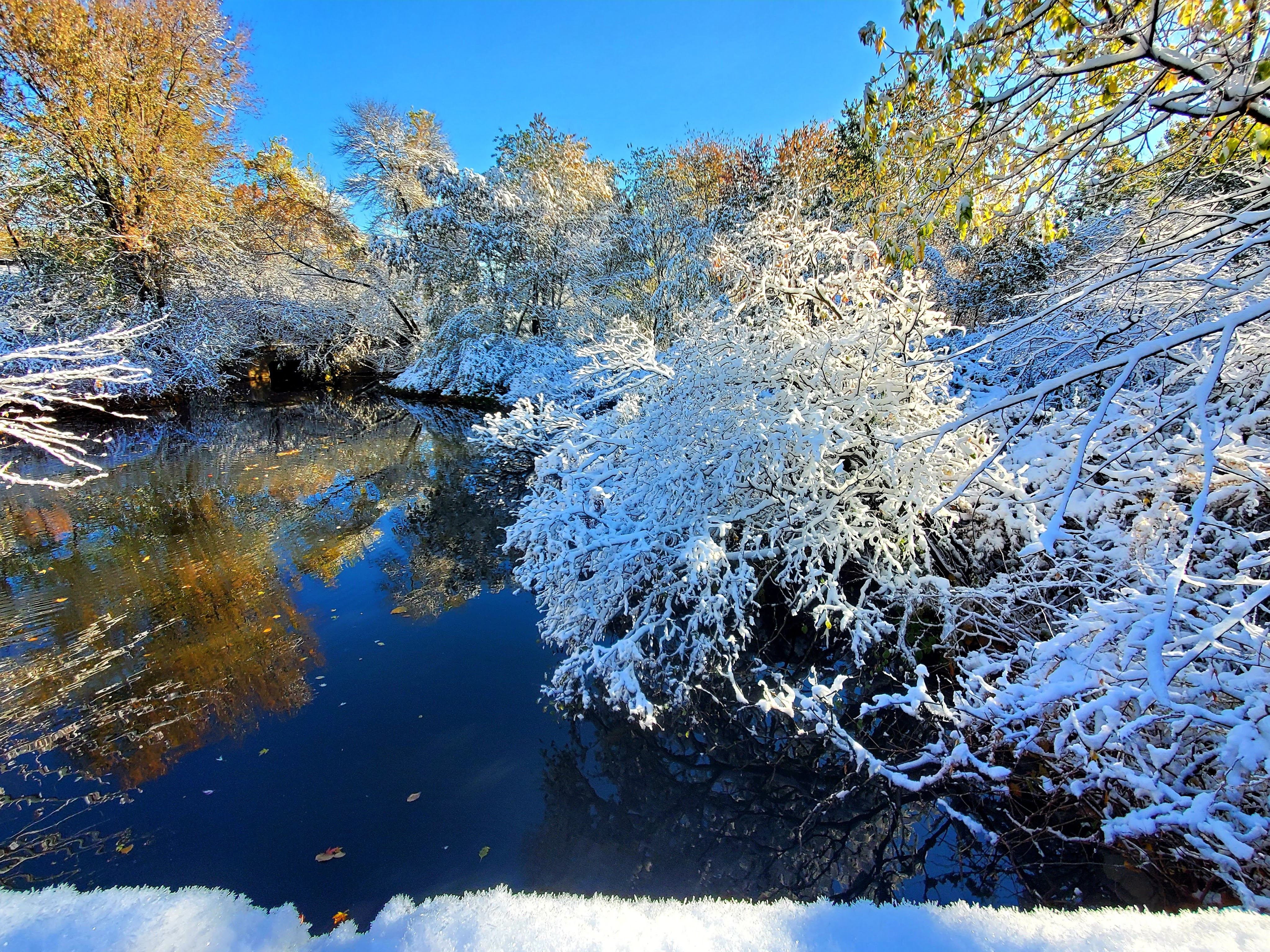 snow covered branches over the pond