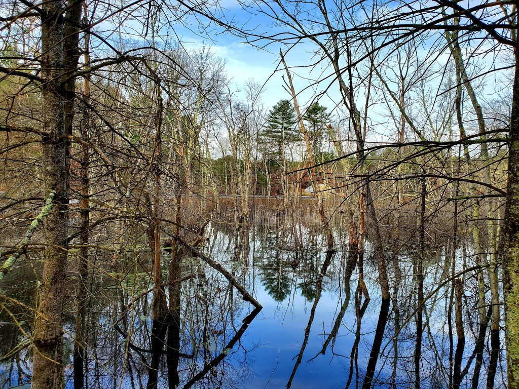 trees reflecting in the pond