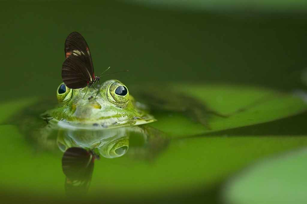 frog poking his head above water