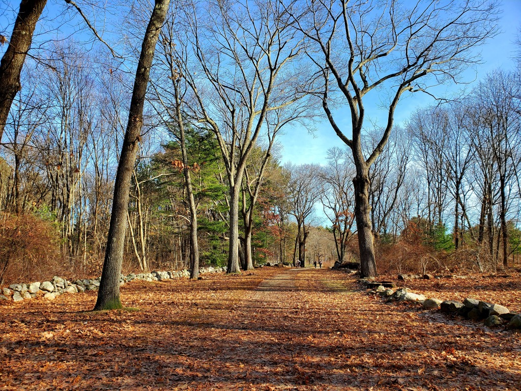 A wide leaf covered path with two walkers far in the distance