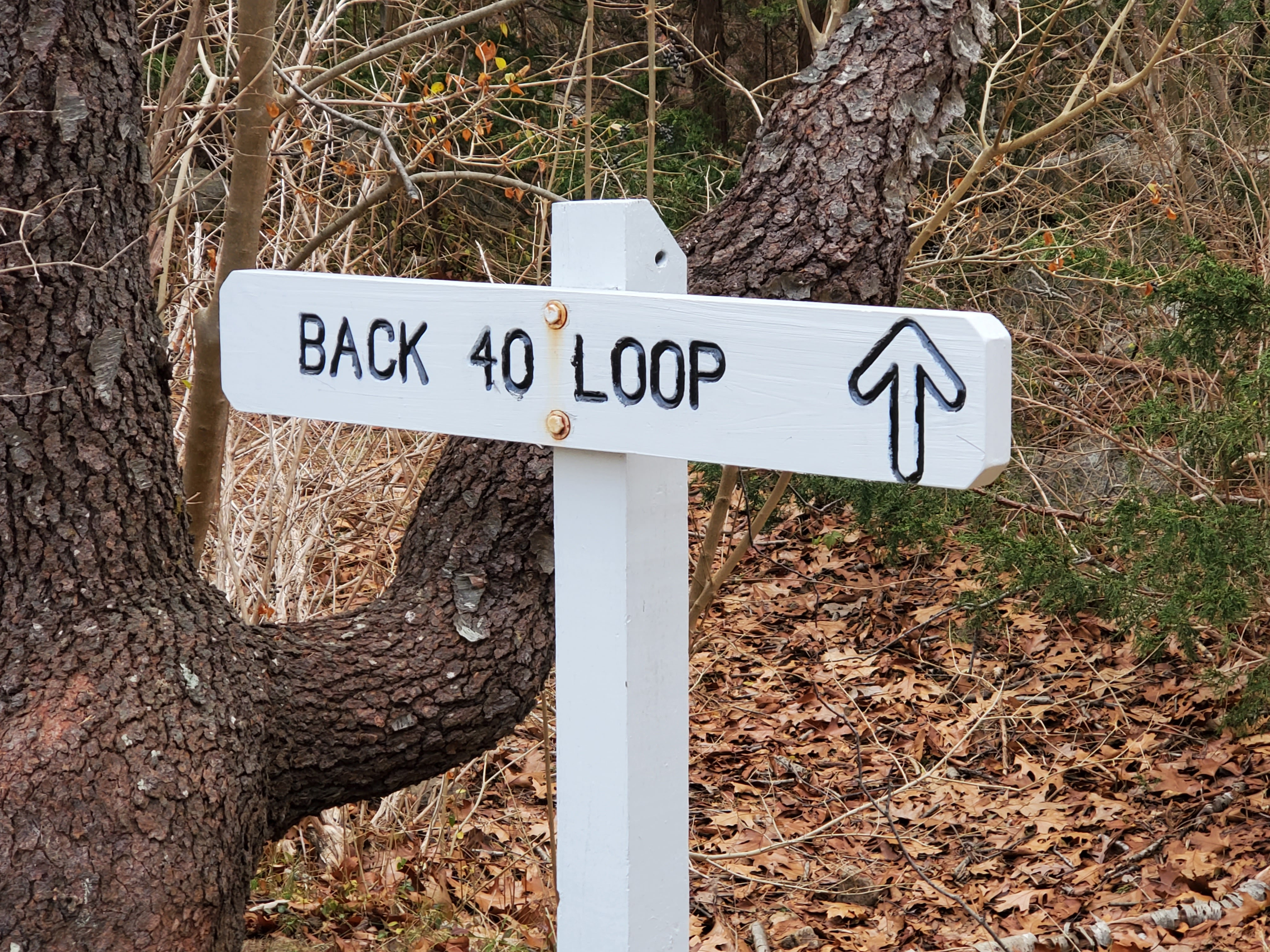 Arrow sign pointing to Back 40 Loop