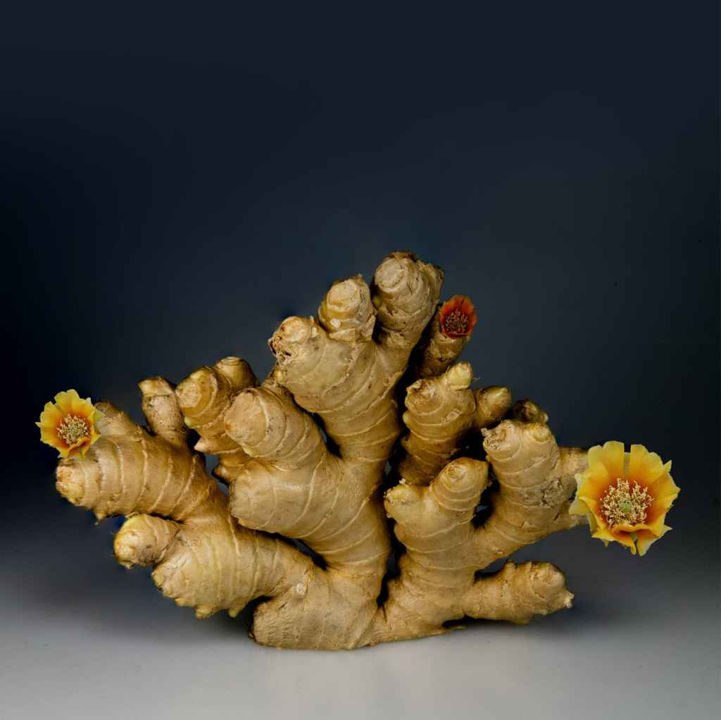 Large piece of flowering ginger